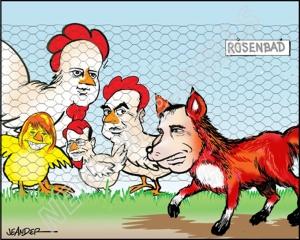 Nu är det oro i hönsgården Rosenbad när den alltmer populäre röde räven S smyger utanför stängslet...